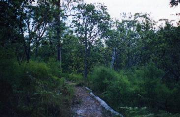 Bush trail on Stradbroke Island, Queensland, Australia taken by Sue Ellam